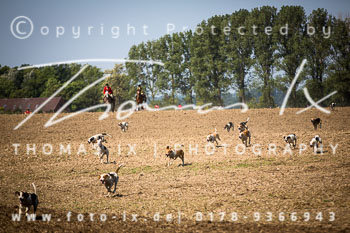 2015_08_23_Jagd_Basthorst-070.jpg