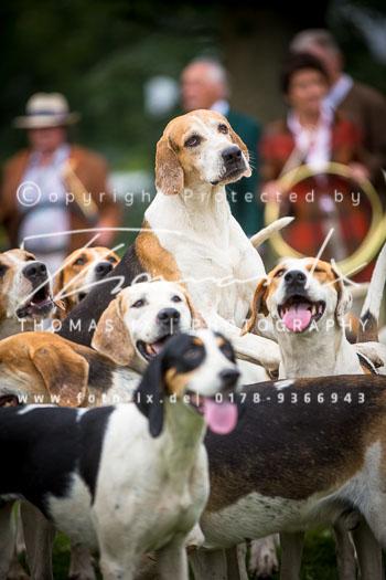 2015_08_30_Jagd_Rohlfshagen-054.jpg