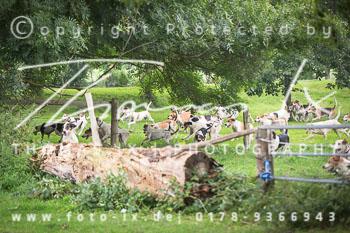 2015_08_30_Jagd_Rohlfshagen-071.jpg