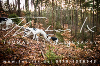 2015_11_28_Jagd_Toppenstedt-085.jpg