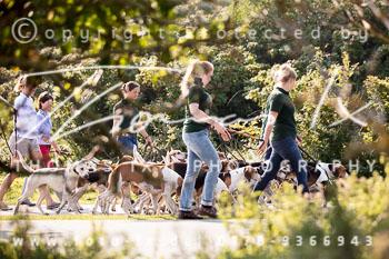 2017_09_04_Hundearbeit_NM_Norderney-019.jpg