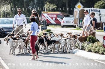 2017_09_04_Hundearbeit_NM_Norderney-030.jpg