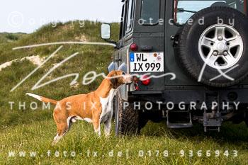 2017_09_04_Hundearbeit_NM_Norderney-088.jpg