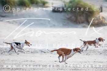 17 - Hundearbeit Norderney