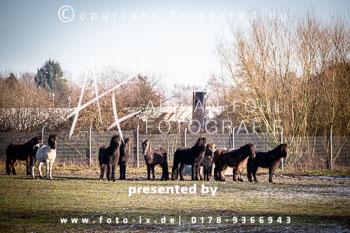 2019_01_19_Meutearbeit_Jesteburg_Fo-052.jpg